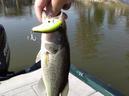 bass_1007_1.jpg