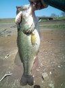 bass_1043_1.jpg