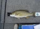 bass_1091_1.jpg
