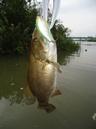 bass_1102_1.jpg