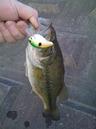 bass_277_1.jpg