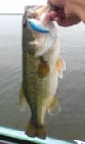 bass_479_1.jpg