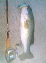bass_495_1.jpg