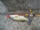 bass_560.jpg