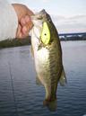 bass_568_1.jpg
