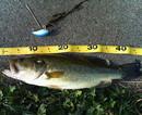 bass_766.jpg