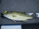 bass_770_1.jpg