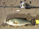 bass_793_1.jpg