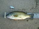 bass_826_1.jpg