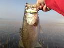 bass_842_1.jpg