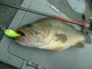 bass_869.jpg