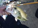 bass_891.jpg