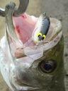 bass_919_1.jpg
