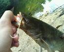 catfish_761.jpg